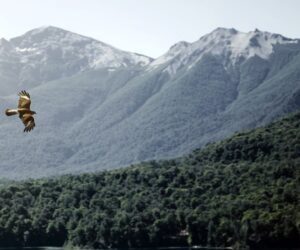 Nace la primera agencia de comunicación en Asturias con vocación rural